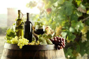 Vinhos Orgânicos