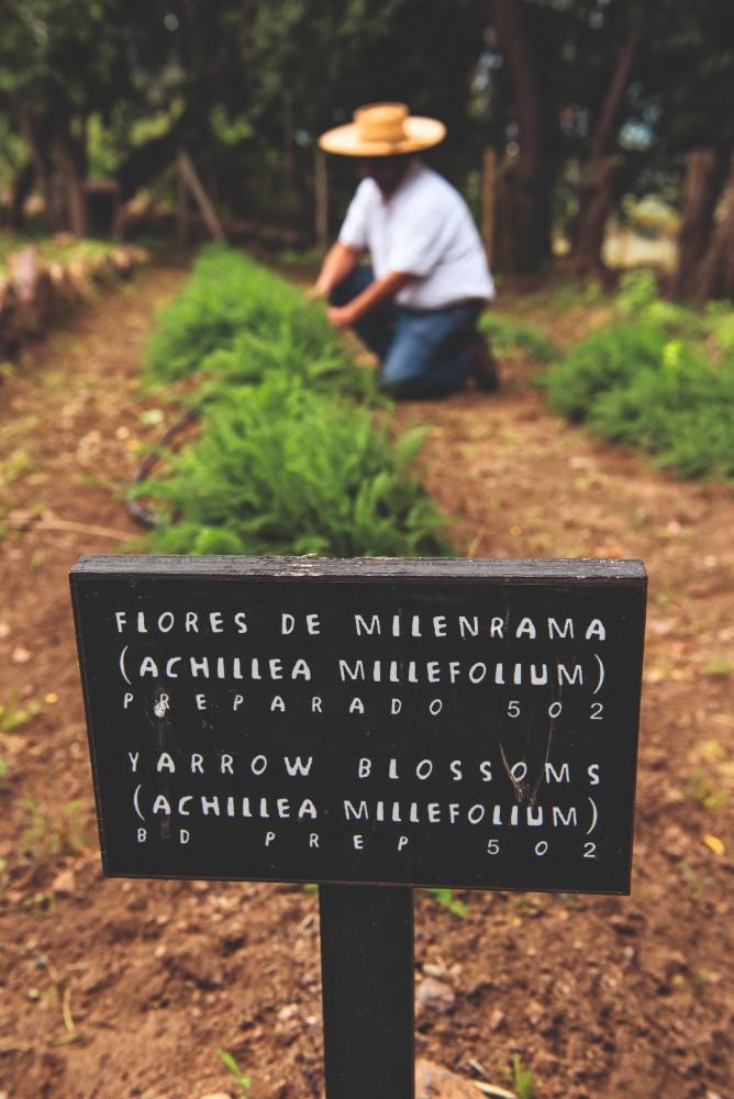 Jardim Biodinâmico