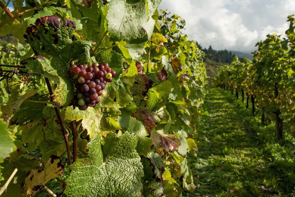 Vinhos Biodinâmicos